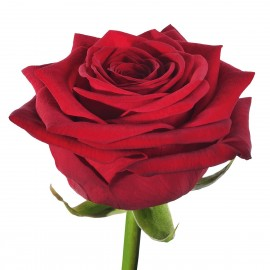 Rose Rosse RED NAOMI